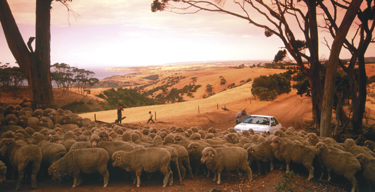 Muster - courtesy Tourism Australia